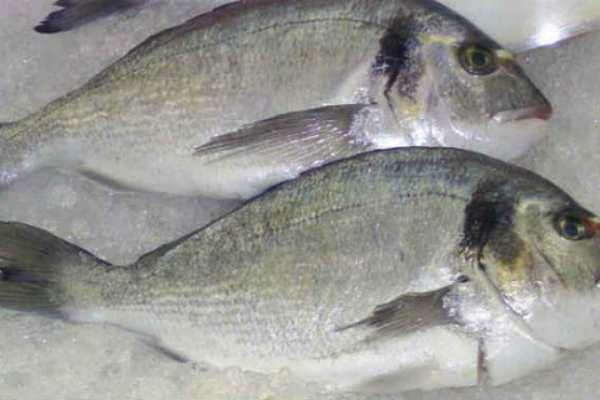 ryba-dorado-polza-i-vred