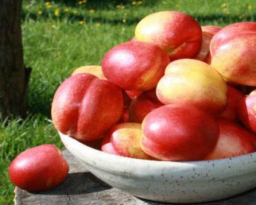 nektarin-svojstva-vred