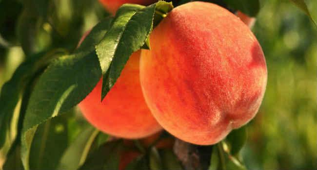 persiki-sostav-vitaminy