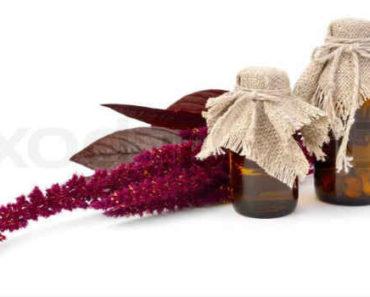 амарантовое масло-польза-вред-состав