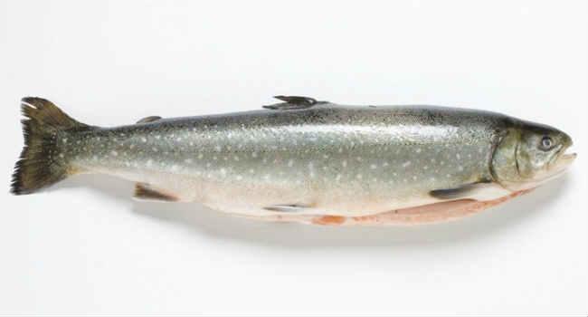 рыба голец-польза-вред