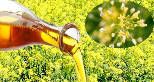 рыжиковое масло-применение-польза-свойства