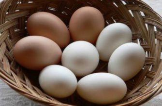 куриные яйца-польза и вред