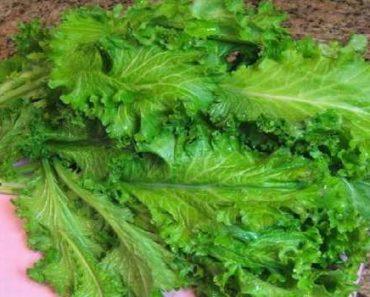 горчица листовая-свойства-вред