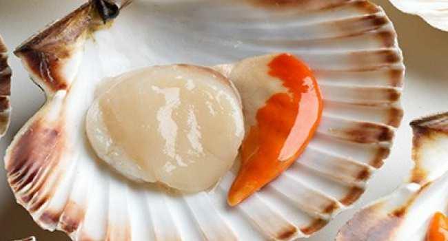 морские гребешки-польза-состав