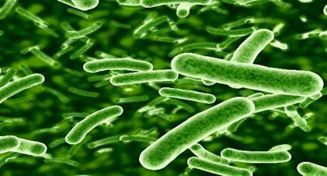 чем полезны пробиотики-что это такое
