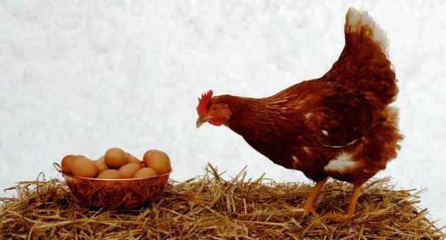 как проверить свежесть яиц-куриных яиц