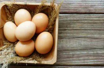 как хранить куриные яйца-срок годности