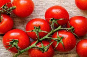 помидоры черри-свойства-польза