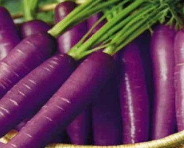 фиолетовая морковь-чем полезна-свойства