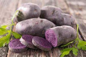 фиолетовый картофель-свойства