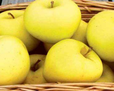 яблоки голден-описание-свойства