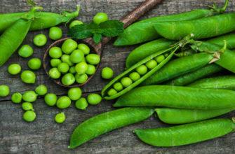 зеленый горошек-польза-противопоказания-как приготовить