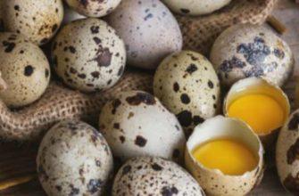 как хранить перепелиные яйца-сколько можно хранить в холодильнике свежие и вареные